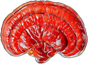 Ganoderma Mosaic  Fotor 1 300x218 - Reishi Mushroom - Ganoderma lucidum